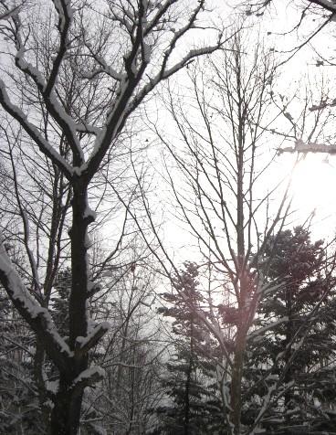 いよいよ雪だ.jpg