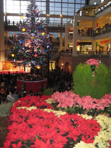 クリスマスツリー&ポインセチア.jpg