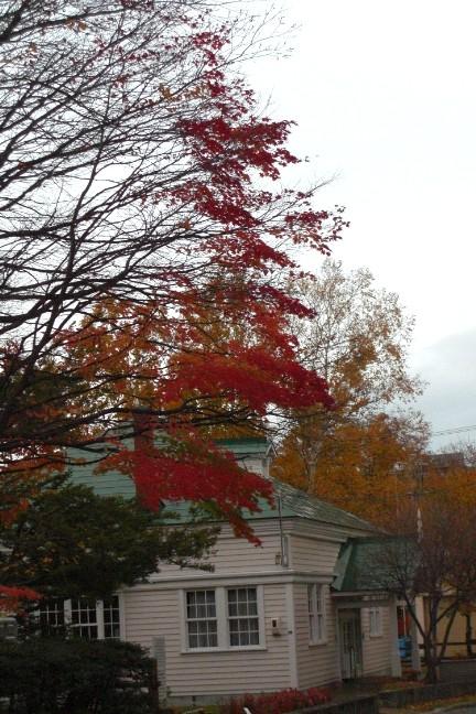 秋のいろいろ2009.jpg