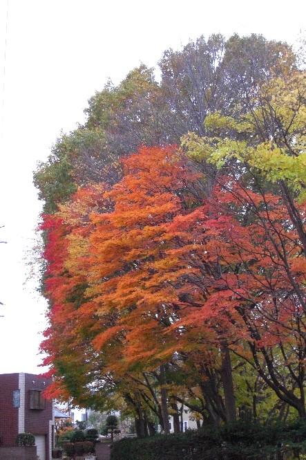 秋の色2009.jpg