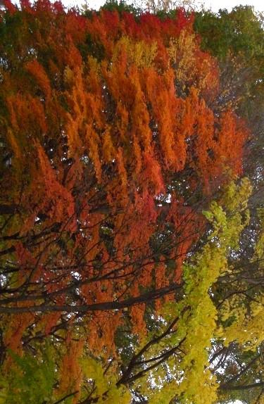 秋を縦にしてみた2009.jpg