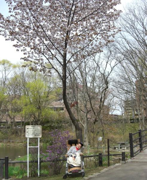 賢治2010年お花見2.jpg